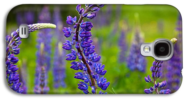 Maine Meadow Galaxy S4 Cases - Lupine Curves Galaxy S4 Case by Susan Cole Kelly