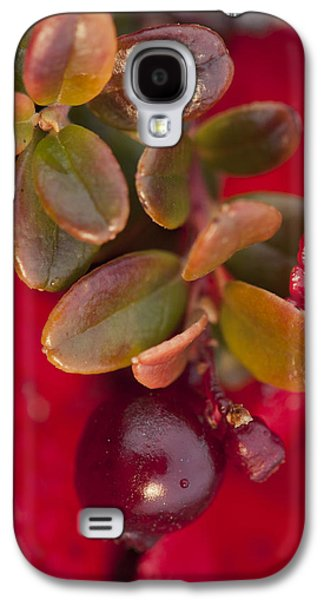 Harts Galaxy S4 Cases - Macro Of Cranberries And Deep Galaxy S4 Case by Cathy Hart