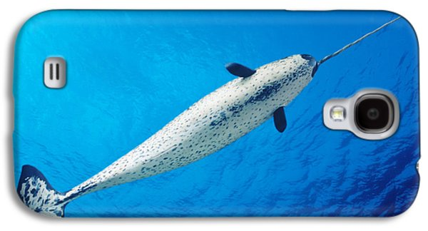 Aquatic Galaxy S4 Cases - Male Narwhal Galaxy S4 Case by Dave Fleetham - Printscapes