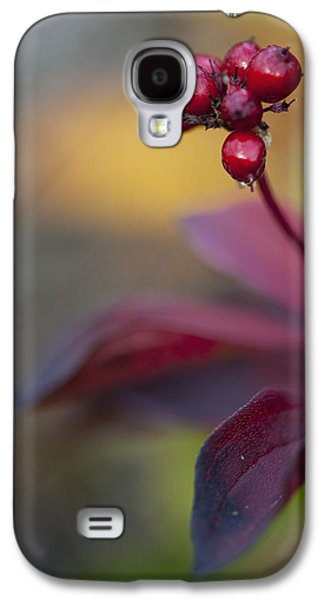 Harts Galaxy S4 Cases - Marco Of High Bush Cranberries In Fall Galaxy S4 Case by Cathy Hart
