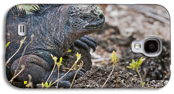 Alga Galaxy S4 Cases - Marine iguana on lava rocks Galaxy S4 Case by MAK Imaging