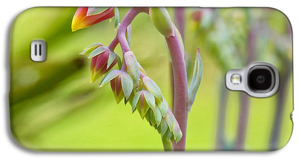Echeveria Flowers Galaxy S4 Case by Frank Fullard