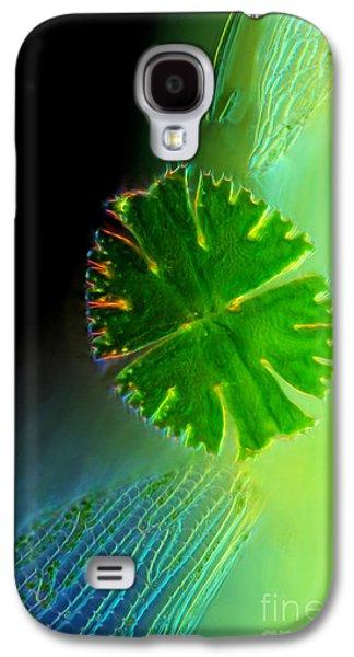 Plankton Galaxy S4 Cases - Micrasterias Apiculata Sphagnum leaf LM Galaxy S4 Case by Marek Mis