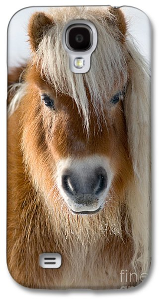 Miniature Photographs Galaxy S4 Cases - Miniature Shetland Pony Galaxy S4 Case by Mark Bowler and Photo Researchers