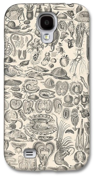 Botanical Galaxy S4 Cases - Mollusca Galaxy S4 Case by Captn Brown