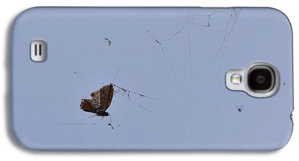 Butterfly Prey Galaxy S4 Cases - Moth Caught in Spider Web Galaxy S4 Case by Linda Brody