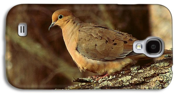 Earth Tones Photographs Galaxy S4 Cases - Mourning Dove at Dusk Galaxy S4 Case by Amy Tyler