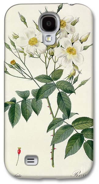 Nature Study Drawings Galaxy S4 Cases - Musk Rose Galaxy S4 Case by Pierre Joseph Redoute