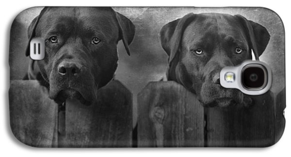 Black Dog Galaxy S4 Cases - Mutt and Jeff Galaxy S4 Case by Larry Marshall