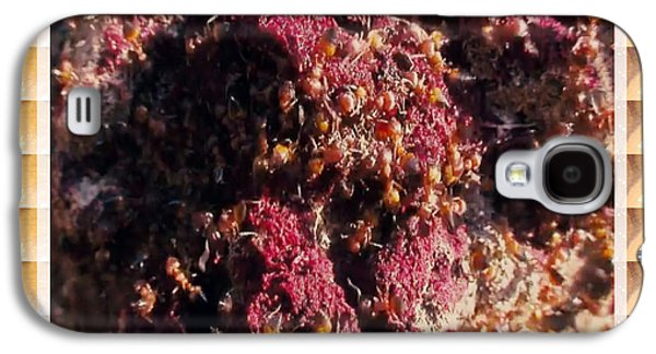 Invertebrates Mixed Media Galaxy S4 Cases - Nature Beautiful  Insect world  Ant Hill Hole Colony  Galaxy S4 Case by Navin Joshi