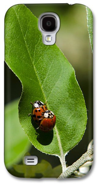 Ladybug Galaxy S4 Cases - Nature - Love Bugs Galaxy S4 Case by Christina Rollo