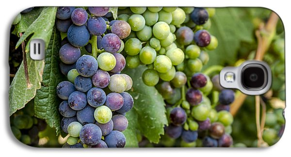 Natures Colors In Wine Grapes Galaxy S4 Case by Teri Virbickis
