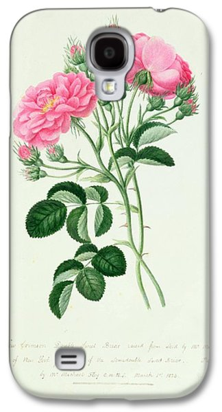 Nature Study Drawings Galaxy S4 Cases - New Crimson Double Sweet Briar of New York Galaxy S4 Case by Pierre Joseph Redoute