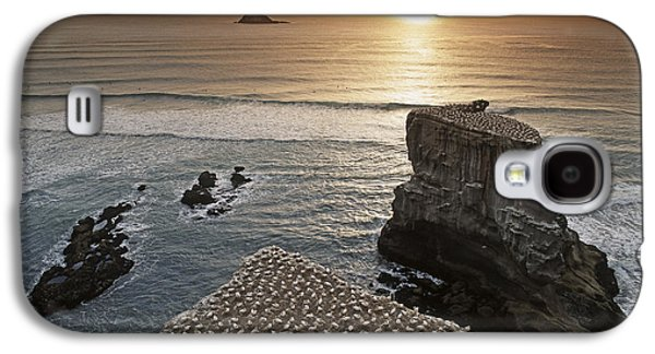 new zealand gannet colony at muriwai beach ,gannet fly from Muri Galaxy S4 Case by Juergen Held