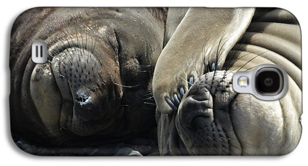 Elephant Seals Galaxy S4 Cases - No more pics please Galaxy S4 Case by Ernie Echols