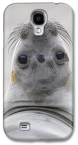 Elephant Seals Galaxy S4 Cases - Northern Elephant Seal Looking Back Galaxy S4 Case by Ingo Arndt