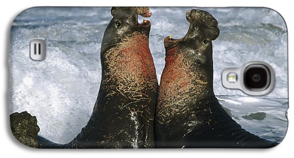 Elephant Seals Galaxy S4 Cases - Northern Elephant Seal Males Fighting Galaxy S4 Case by Tim Fitzharris
