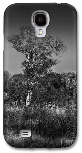 Country Dirt Roads Galaxy S4 Cases - Oak And Palm Galaxy S4 Case by Marvin Spates