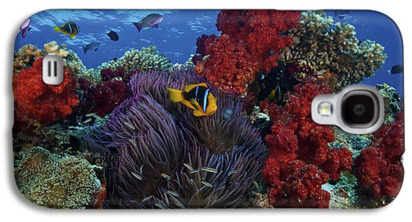 Undersea Photography Galaxy S4 Cases - Orange-finned Clownfish And Soft Corals Galaxy S4 Case by Terry Moore