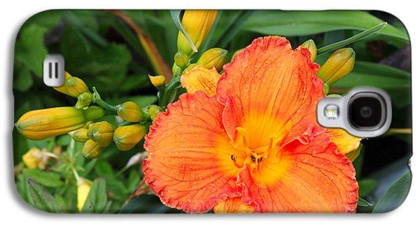 Orange Gladiola Flower And Buds Galaxy S4 Case by Corey Ford