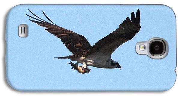 Osprey With Fish Galaxy S4 Case by Carol Groenen