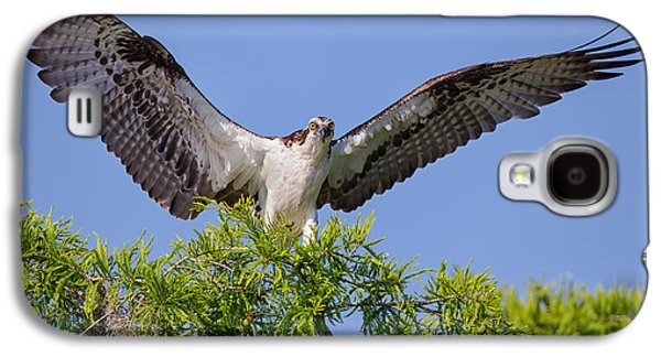 Background Photographs Galaxy S4 Cases - Osprey with Wide-Open Wings Galaxy S4 Case by Andres Leon
