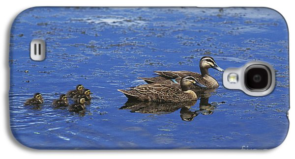 Pacific Black Duck Anas Superciliosa Galaxy S4 Case by Gerard Lacz