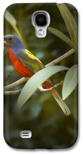 Painted Bunting Male Galaxy S4 Case by Phill Doherty