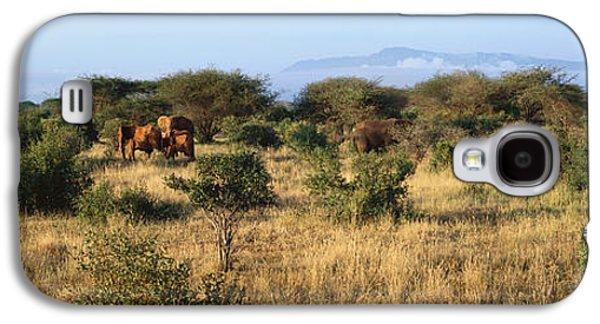 Wildlife Refuge. Galaxy S4 Cases - Panoramic View Of African Elephants Galaxy S4 Case by Panoramic Images