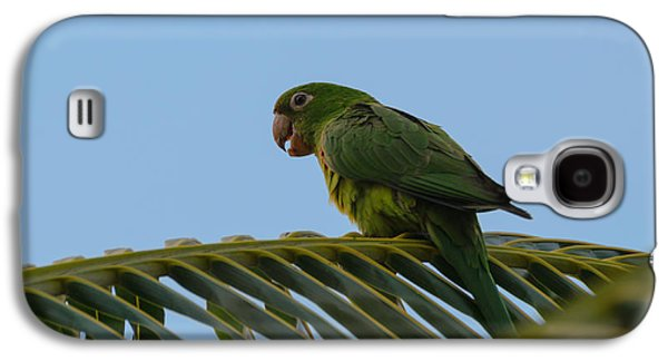 Studio Photographs Galaxy S4 Cases - Parrot Galaxy S4 Case by Daniel Precht
