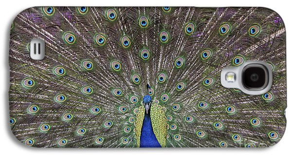Peacock Display Galaxy S4 Case by Tim Gainey