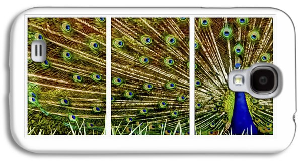 Business Galaxy S4 Cases - Peacock feathers in frame triptych Galaxy S4 Case by Geraldine Scull