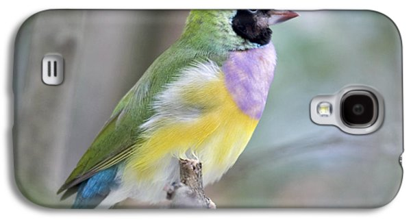 Best Sellers Photographs Galaxy S4 Cases - Perched Gouldian Finch Galaxy S4 Case by Glennis Siverson