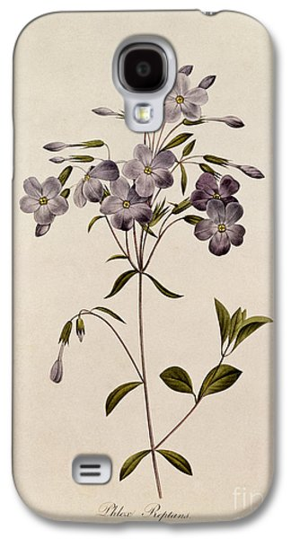 19th Galaxy S4 Cases - Phlox reptans Galaxy S4 Case by Pierre Joseph Redoute
