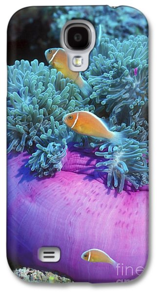 Undersea Photography Galaxy S4 Cases - Pink Anemonefish Protect Their Purple Galaxy S4 Case by Michael Wood