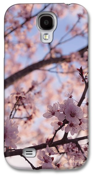 Cherry Blossoms Galaxy S4 Cases - Pink Cherry Blossoms Galaxy S4 Case by Ana V  Ramirez
