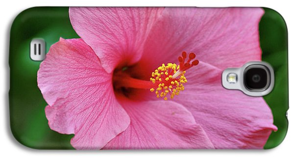 Indiana Flowers Galaxy S4 Cases - Pink Hibiscus Galaxy S4 Case by Sandy Keeton