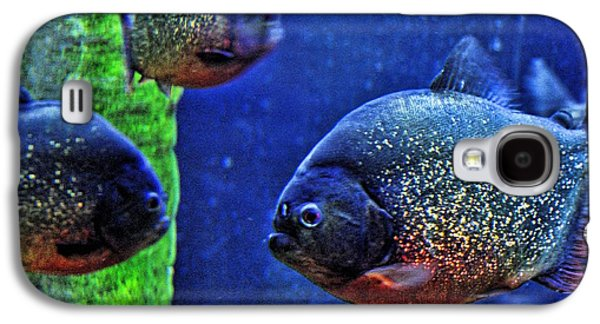 Piranha Blue Galaxy S4 Case by Jan Amiss Photography