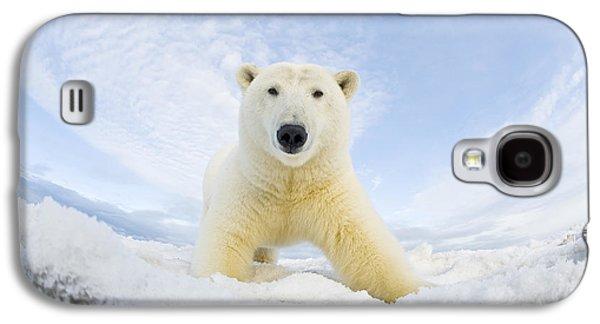 Polar Bear  Ursus Maritimus , Curious Galaxy S4 Case by Steven Kazlowski