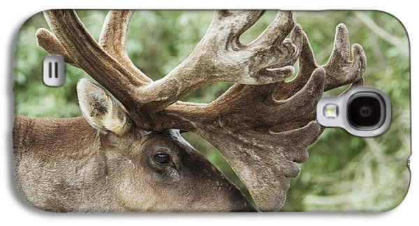 Harts Galaxy S4 Cases - Portrait Of A Caribou In Denali Galaxy S4 Case by Cathy Hart