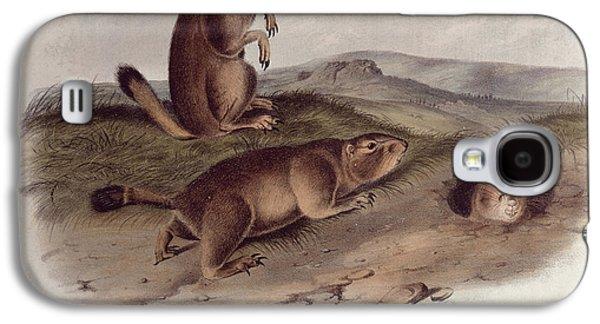 North Drawings Galaxy S4 Cases - Prairie Dog Galaxy S4 Case by John James Audubon
