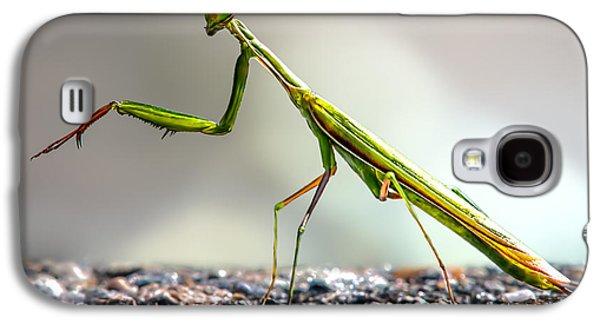 Biology Photographs Galaxy S4 Cases - Praying Mantis  Galaxy S4 Case by Bob Orsillo
