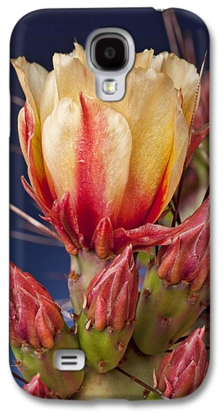Kelley King Galaxy S4 Cases - Prickly Pear Flower Galaxy S4 Case by Kelley King
