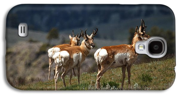 Grazing Snow Galaxy S4 Cases - Pronghorns Galaxy S4 Case by Robert Bales