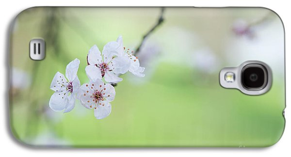 Purple Leaved Cherry Plum Blossom Galaxy S4 Case by Tim Gainey