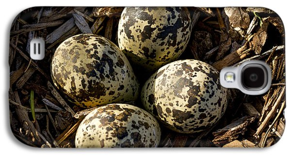 Quartet Of Killdeer Eggs By Jean Noren Galaxy S4 Case by Jean Noren