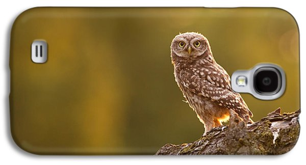 Qui, Moi? Little Owlet In Warm Light Galaxy S4 Case by Roeselien Raimond