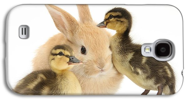 Domesticated Animals Galaxy S4 Cases - Rabbit And Ducklings Galaxy S4 Case by Mark Taylor