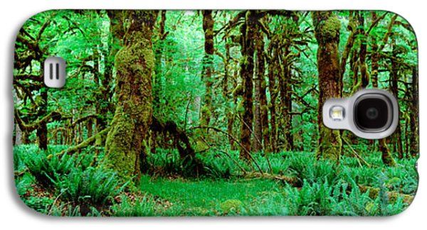 Rain Forest, Olympic National Park Galaxy S4 Case by Panoramic Images