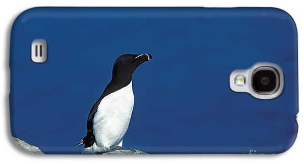 Razor-billed Auk Alca Torda Galaxy S4 Case by Gerard Lacz